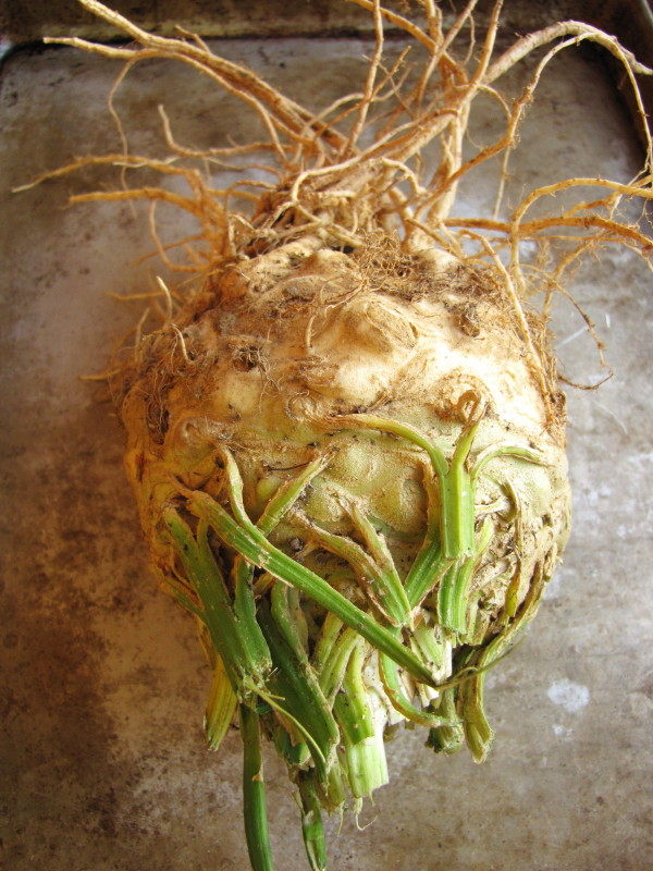 ten yes 10 things to do with celery root sixburnersue com