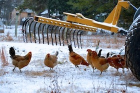 chickens tractor 1