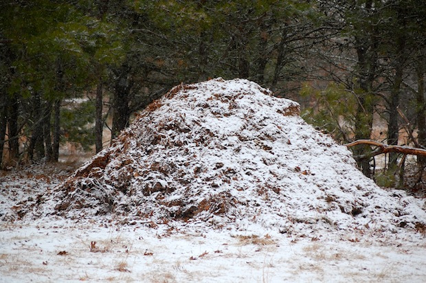 compost pile in snow