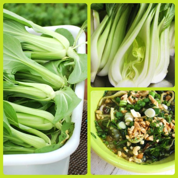 bok choy Collage