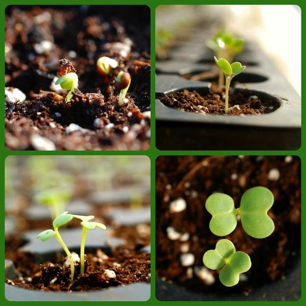 seedling pic 2