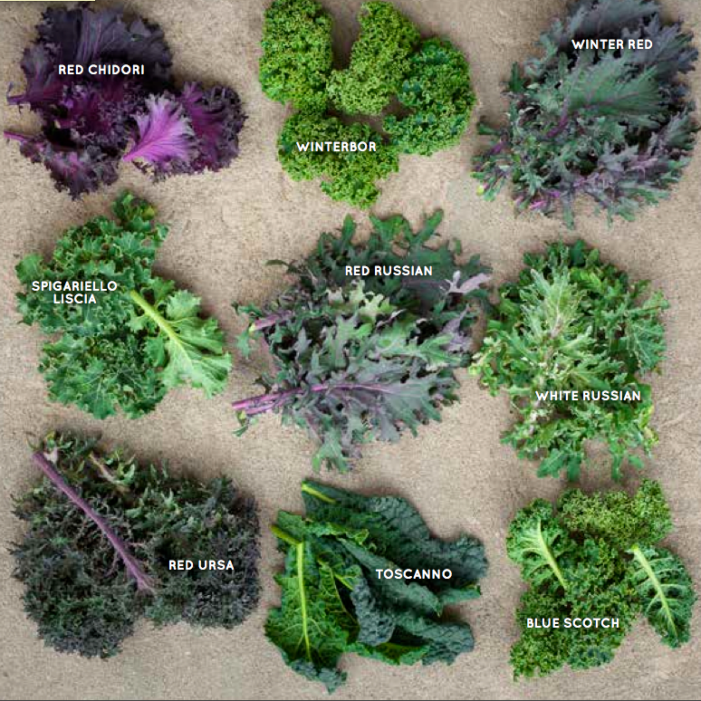 kale types screen shot