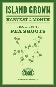 HoM_Poster_Pea-Shoots_February_2015_WEB-291x450